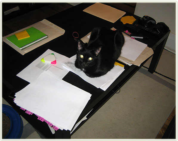 Nemo's working out how much I'm allowed to spend on makeup for the next year…